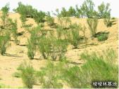 6楓之琳園藝小苗種子圖檔很多稀有植物:U867P337T1D89F9DT20050114114133.jpg