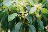 6楓之琳園藝小苗種子圖檔很多稀有植物:20128783251212.gif