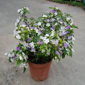 14楓之琳園藝小苗種子圖檔很多稀有植物:T1HVBXXx4aXXXXXXXX_!!0-item_pic.jpg_310x310.jpg