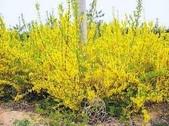 4楓之琳園藝小苗種子圖檔很多稀有植物:yEf9W_hby1aITTxjCjn2AA.jpg