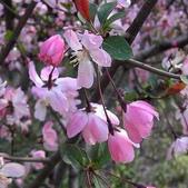 12楓之琳園藝小苗種子圖檔很多稀有植物:T2GeYkXeVbXXXXXXXX_!!1056074050.jpg_310x310.jpg
