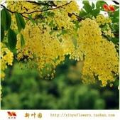 5楓之琳園藝小苗種子圖檔很多稀有植物:Sji1xkc4tO8DWRwlV1BxFg.jpg