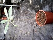 6楓之琳園藝小苗種子圖檔很多稀有植物:IMG_20131004_112817.jpg