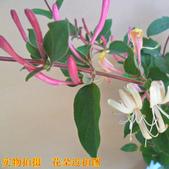6楓之琳園藝小苗種子圖檔很多稀有植物:T2RArTXXJaXXXXXXXX_!!1591297428.jpg
