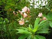 6楓之琳園藝小苗種子圖檔很多稀有植物:下載 (4).jpg