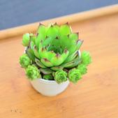 6楓之琳園藝小苗種子圖檔很多稀有植物:T27NBoXitOXXXXXXXX_!!1678185799.jpg