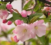 4楓之琳園藝小苗種子圖檔很多稀有植物:gsTUDul_92uTq3xsIfkhyA.jpg
