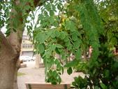 6楓之琳園藝小苗種子圖檔很多稀有植物:1317909392-2021373066_l.jpg