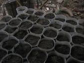 14楓之琳園藝小苗種子圖檔很多稀有植物:IMG_5361.jpg