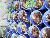 9楓之琳園藝小苗種子圖檔很多稀有植物:IMG_20130806_121842.jpg