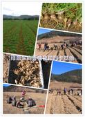 6楓之琳園藝小苗種子圖檔很多稀有植物:T2eCVmXg4OXXXXXXXX_!!1069985381.jpg