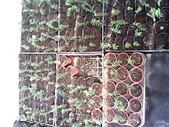 6楓之琳園藝小苗種子圖檔很多稀有植物:IMG_20131004_113037.jpg