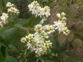 6楓之琳園藝小苗種子圖檔很多稀有植物:images (2).jpg