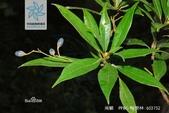 6楓之琳園藝小苗種子圖檔很多稀有植物:fcfaaf51f3deb48fdfb4ade9f11f3a292cf5e0fe9925401b.jpg