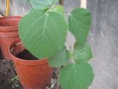 13楓之琳園藝小苗種子圖檔很多稀有植物:IMG_5556.jpg