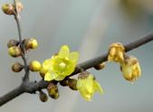 4楓之琳園藝小苗種子圖檔很多稀有植物:01300000239502122155808899657.jpg
