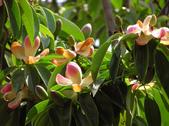 2楓之琳園藝小苗種子圖檔很多稀有植物:OPzN6EEf1yQLNxe1Vu6dQA.jpg