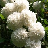 10楓之琳園藝小苗種子圖檔很多稀有植物:T2zyvoXlNaXXXXXXXX_!!1021427523.jpg_310x310.jpg