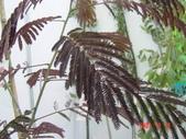 5楓之琳園藝小苗種子圖檔很多稀有植物:NQ9uttJvyAi931OcfWfcbQ.jpg