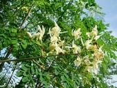 6楓之琳園藝小苗種子圖檔很多稀有植物:20121229045550805.jpg