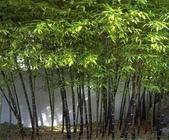 15楓之琳園藝小苗種子圖檔很多稀有植物:T18fvNXkdjXXcD6VYc_125642.jpg_310x310.jpg