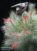 14楓之琳園藝小苗種子圖檔很多稀有植物:T1ML1iXk0qXXX6nkUZ_033235.jpg_310x310.jpg