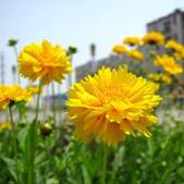14楓之琳園藝小苗種子圖檔很多稀有植物:T1dGypXe8tXXasQJ70_034716.jpg_310x310.jpg