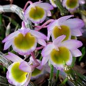 13楓之琳園藝小苗種子圖檔很多稀有植物:T1SYgsXaJgXXXXXXXX_!!0-item_pic.jpg_310x310.jpg