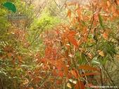 6楓之琳園藝小苗種子圖檔很多稀有植物:51781.jpg