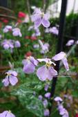 6楓之琳園藝小苗種子圖檔很多稀有植物:T26Vv0XXhaXXXXXXXX_!!126764801.jpg
