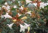 15楓之琳園藝小苗種子圖檔很多稀有植物:17-04-25-48-1.jpg