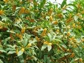 4楓之琳園藝小苗種子圖檔很多稀有植物:JyBJUH10pxUawWCqugxZvA.jpg
