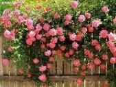 4楓之琳園藝小苗種子圖檔很多稀有植物:mQIpIDmrEBofxSC36SG8YQ.jpg