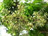 6楓之琳園藝小苗種子圖檔很多稀有植物:下載 (10).jpg