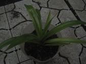 11楓之琳園藝小苗種子圖檔很多稀有植物:IMG_5387.jpg
