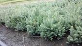 13楓之琳園藝小苗種子圖檔很多稀有植物:psb.jpg