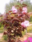 14楓之琳園藝小苗種子圖檔很多稀有植物:b2b_20111009055326625583.jpg