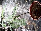 6楓之琳園藝小苗種子圖檔很多稀有植物:IMG_20131004_114240.jpg