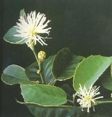 6楓之琳園藝小苗種子圖檔很多稀有植物:01300000248324122338454782188_s.jpg