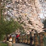 3楓之琳園藝小苗種子圖檔很多稀有植物:crop_0.76347700 1377856098.jpg