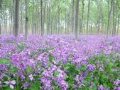 6楓之琳園藝小苗種子圖檔很多稀有植物:2011818156528539.jpg