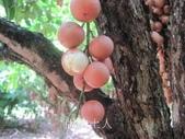 14楓之琳園藝小苗種子圖檔很多稀有植物:T23IVlXd8NXXXXXXXX_!!62484173.jpg