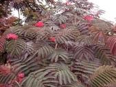 5楓之琳園藝小苗種子圖檔很多稀有植物:CKAtsW8fqIbe5i7D5oCSpg.jpg