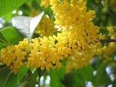 4楓之琳園藝小苗種子圖檔很多稀有植物:1U2hikf8HeSSkHUtQxgYgw.jpg