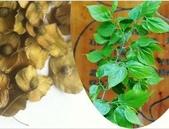 15楓之琳園藝小苗種子圖檔很多稀有植物:T1cjVSXulgXXXXXXXX_!!0-item_pic.jpg_310x310.jpg