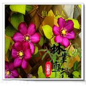 6楓之琳園藝小苗種子圖檔很多稀有植物:T2DqW3XeXXXXXXXXXX_!!83427479.jpg
