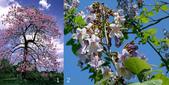2楓之琳園藝小苗種子圖檔很多稀有植物:PU3qdvv_XouO5ciWTVZxug.jpg