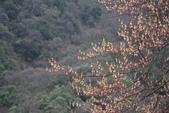 6楓之琳園藝小苗種子圖檔很多稀有植物:20080917_f9817d1e60e335719350N1mfFDBr1j6c.jpg