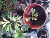 14楓之琳園藝小苗種子圖檔很多稀有植物:20130627_124304.jpg
