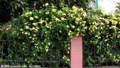 4楓之琳園藝小苗種子圖檔很多稀有植物:qRKtoBr3Fu04hpPSj7tkWg.jpg
